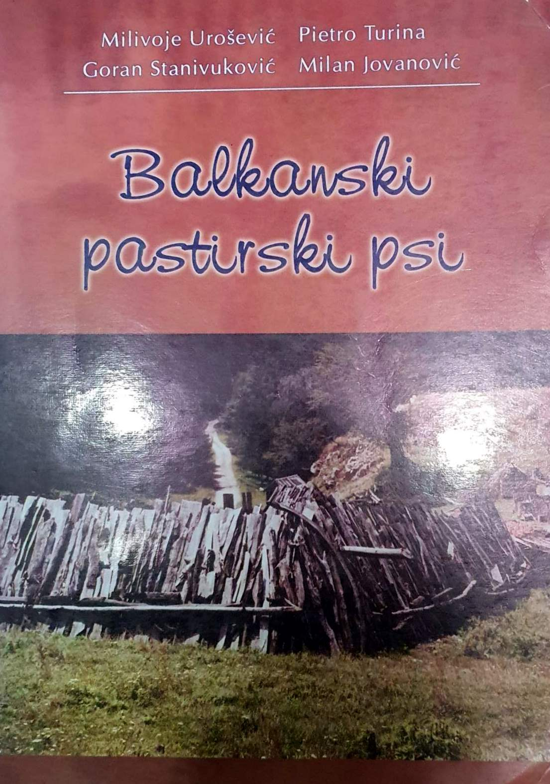 balkanski pastirski psi