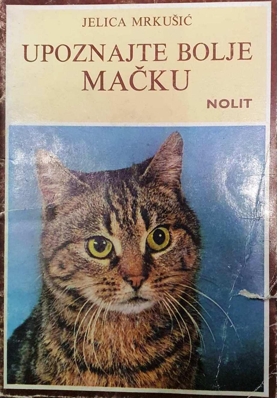 upoznajte-bolje-mačku